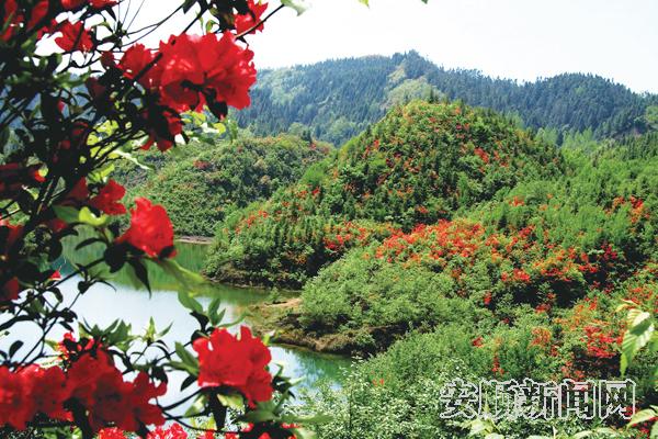 九龙山国家森林公园,国家4a级景区夜郎洞;有花江大峡谷,夜郎湖,斯拉河